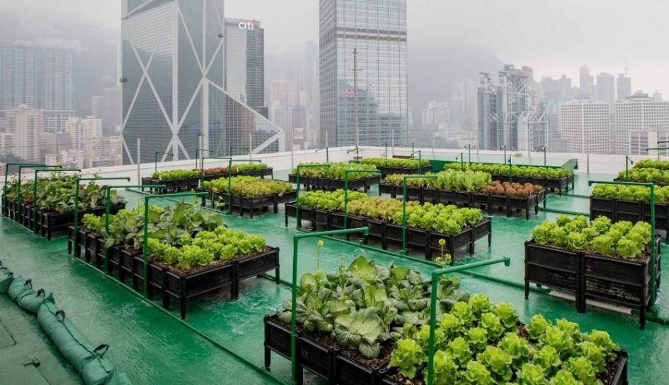 Tarım ve Kentsel Kalkınma